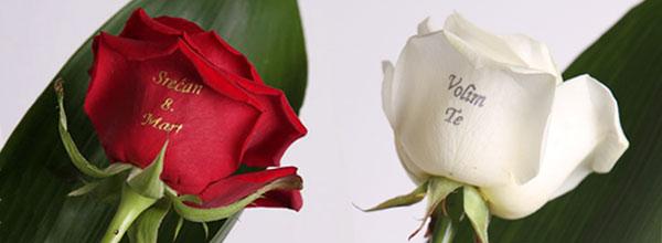 Ruže za osmi mart